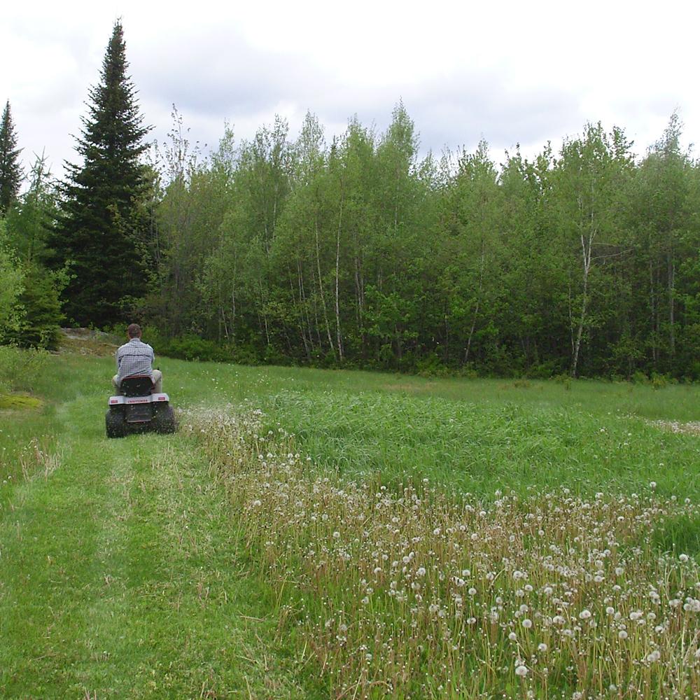 La pelouse et moi, une guerre à long terme
