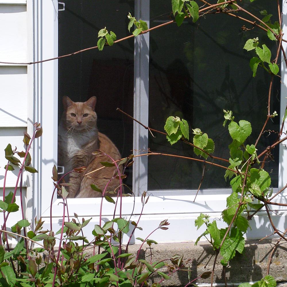 Chat et fenêtre… bonheur!