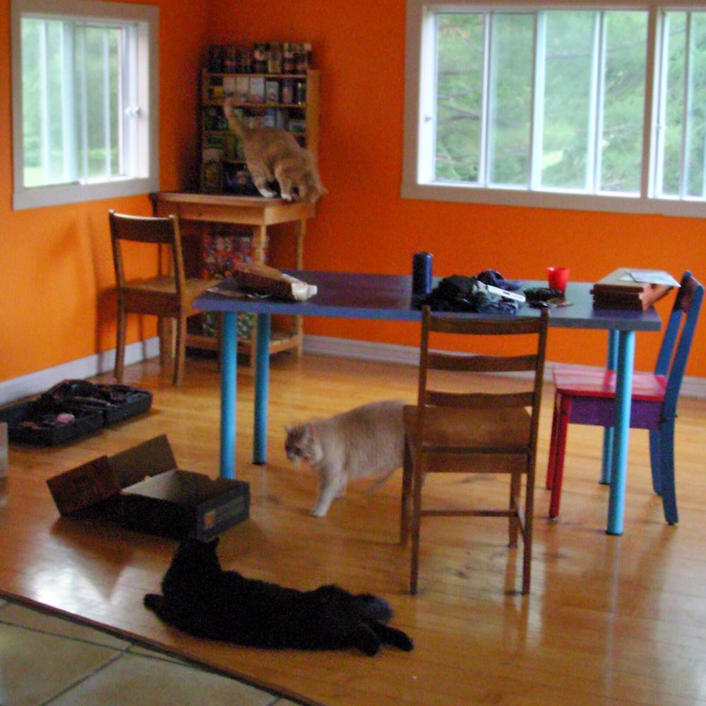 Chats et chien: des progrès