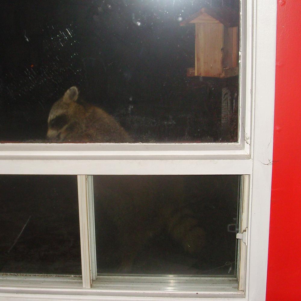 Visiteur nocturne