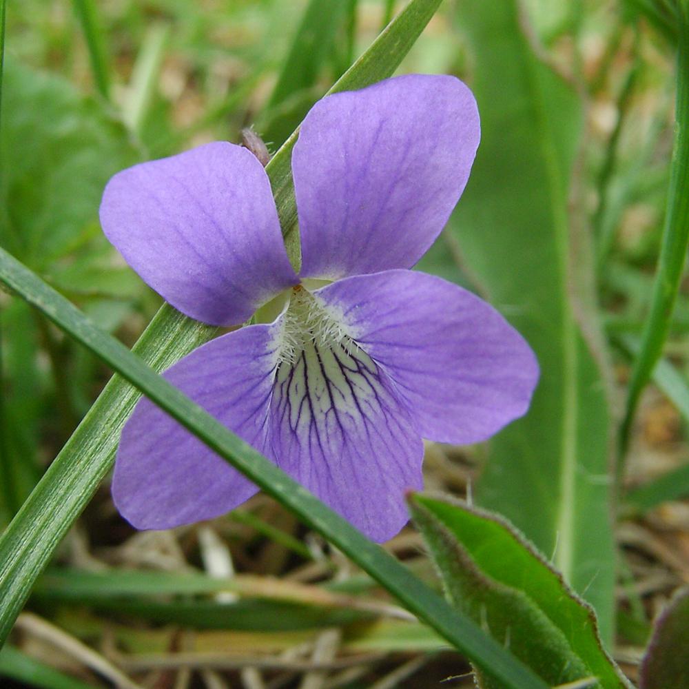 Violette, violette (à bicyclette)