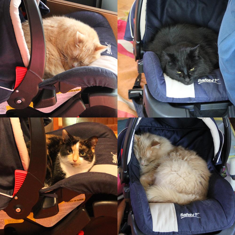 Siège d'auto pour chats