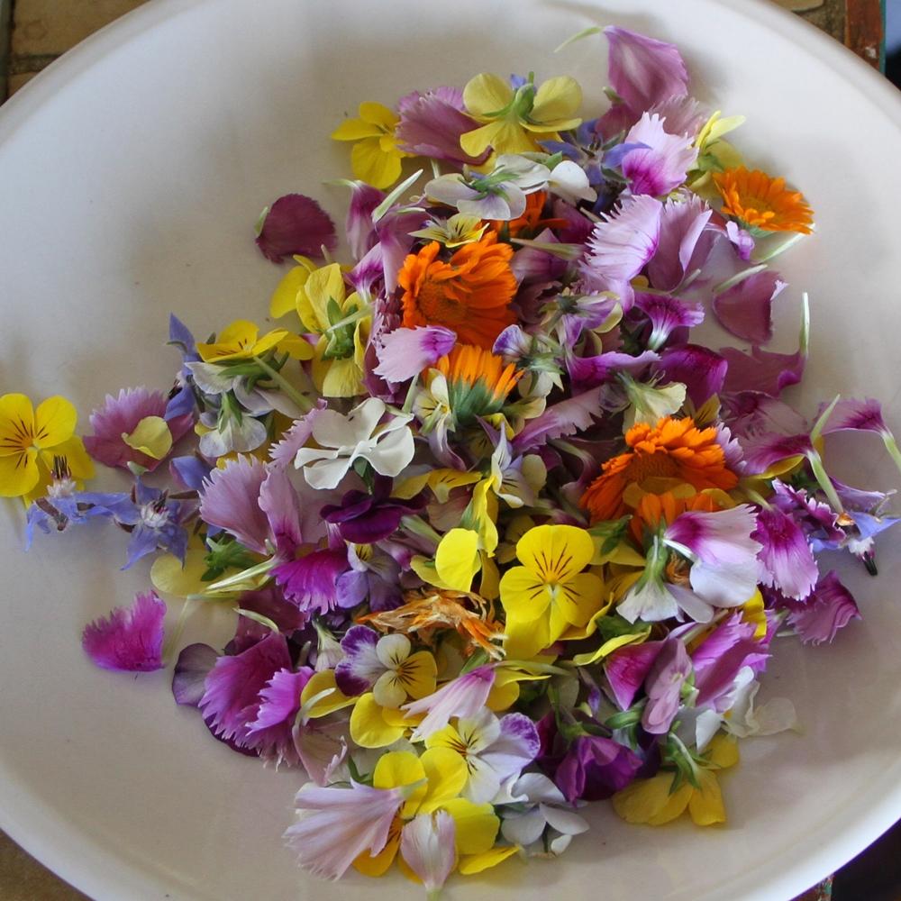 Un été en fleurs