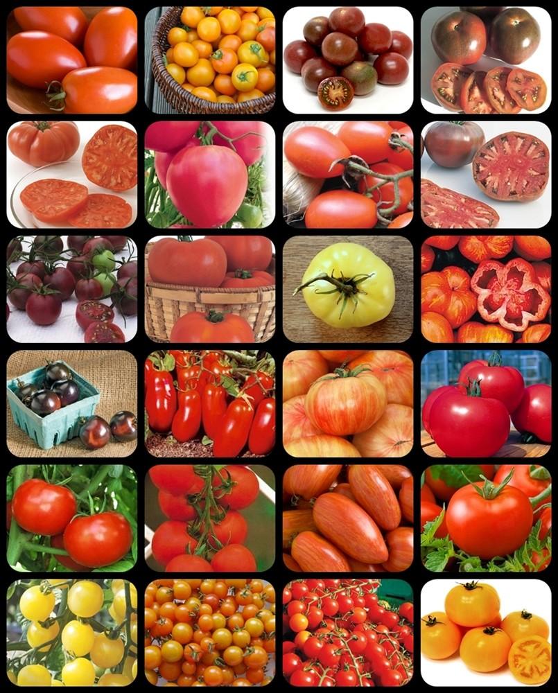 24 tomates