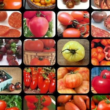 24 tomates-title