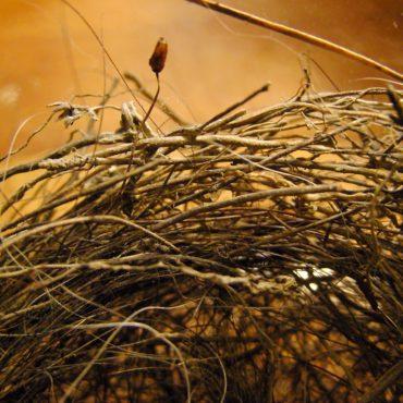 Macro du vendredi (un début): un nid