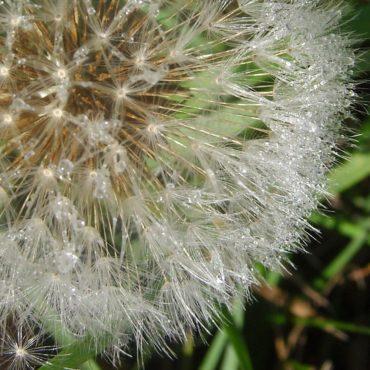 Macro du vendredi: l'étape des semences