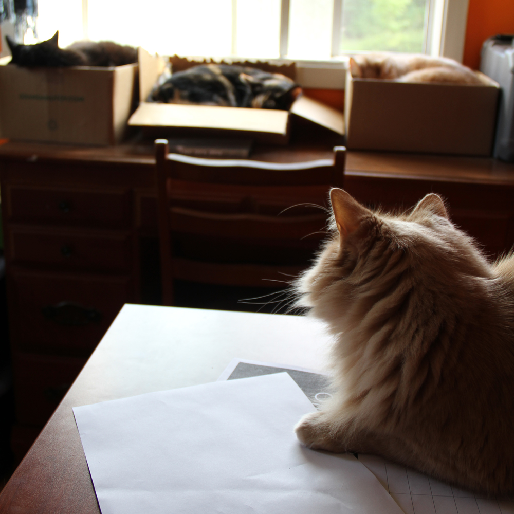 Les chats et moi… et lui ou elle