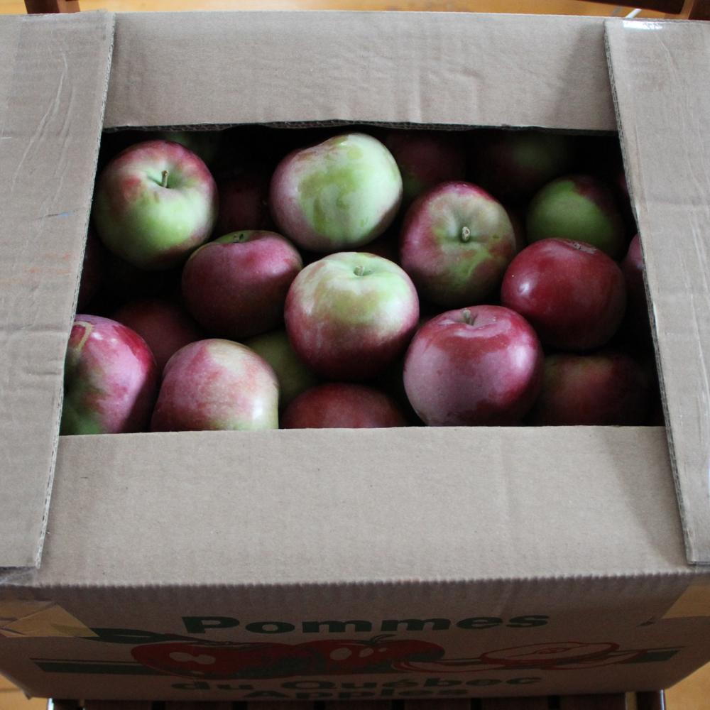 Pommes, pommes, pommes