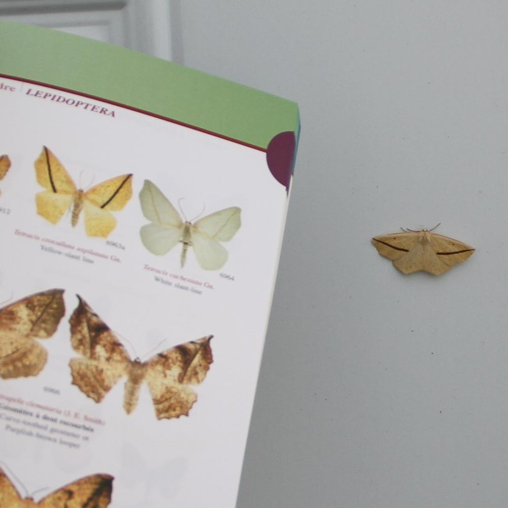 Un papillon portier