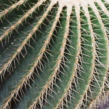Macro du vendredi: Cactus