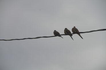 Nature du dimanche: Trois